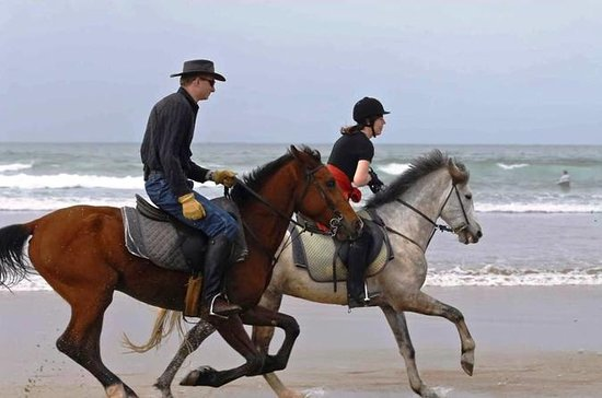 Enjoy 2 hours Horse beach ride in...