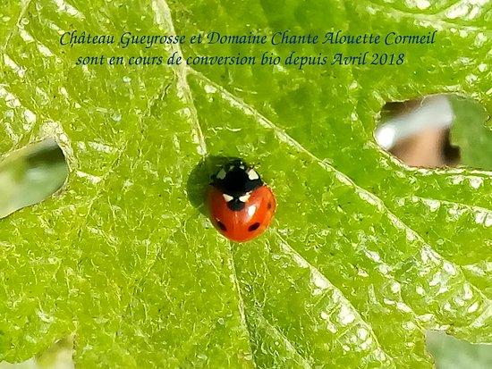 Libourne, France: Vignobles Yves Delol en cours de conversion bio depuis Avril 2018