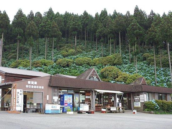 Hanazono Ajisaien