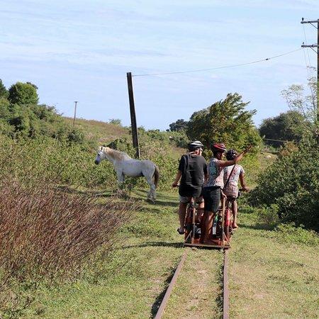 Ecotrax Fiji照片