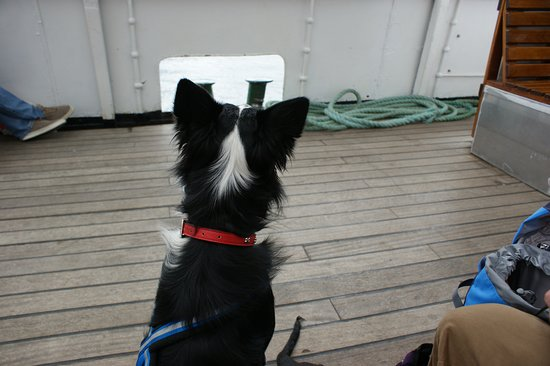 Windermere Lake Cruises: From a pup's point of 'view'!
