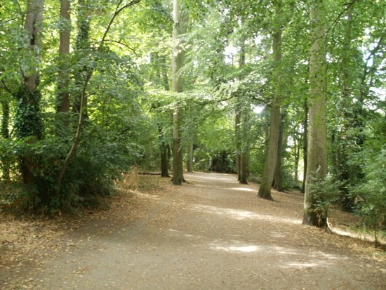 Caversham, UK: Trees line the route leading to and from the Hay Meadow.