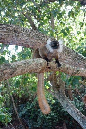 Nosy Tanihely, Madagascar: lémurien