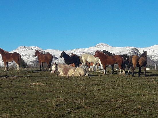 Cabalgatas El Pampa