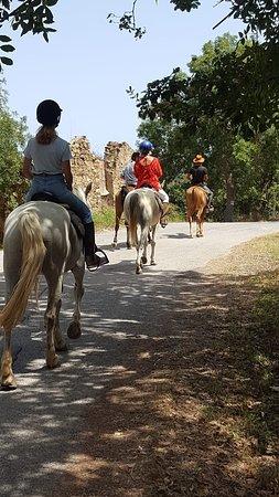 Sicily Horse Tours: IMG-20180721-WA0019_large.jpg