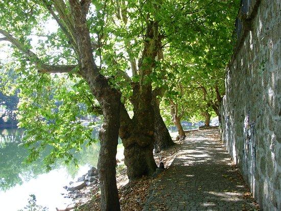 Armamar, Portugal: As margens cheias de sombra do rio Tâmega
