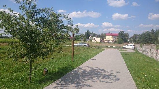 Izabelin, โปแลนด์: świetnie pomyslana aleja z dębami-DROGA PAMIĘCI