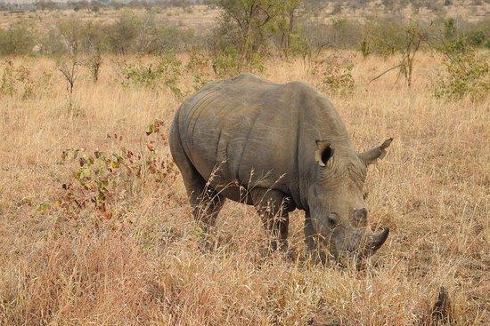 Manyeleti Game Reserve, Sudáfrica: DSCN2832_large.jpg