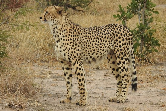 Manyeleti Game Reserve, Sudáfrica: DSCN2861_large.jpg