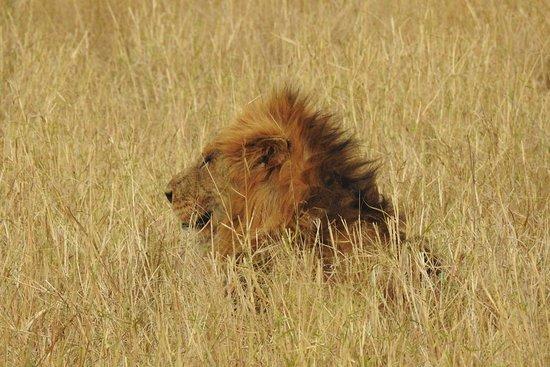 Manyeleti Game Reserve, Sudáfrica: DSCN2938_large.jpg