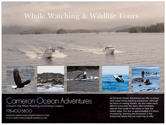Cameron Ocean Adventures - Whale Watching and Wildlife Tour in Ucluelet, BC Canada