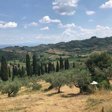 Capezzana, Italia: photo2.jpg