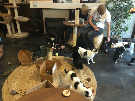 You&Meow Cat Cafe