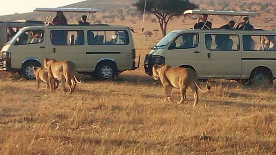 Explore Africa Holidays Safaris