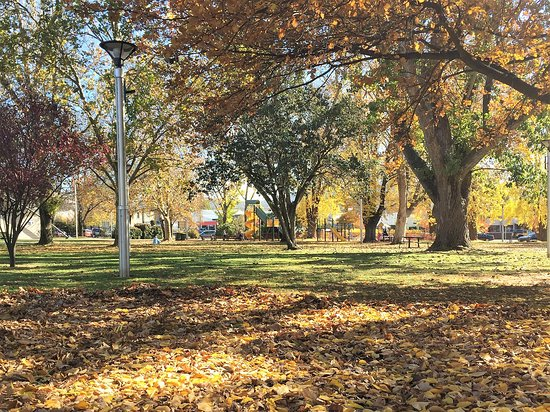 Cooma, Australia: Autumn leaves