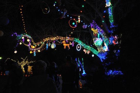 Christmas Lights In Wichita Ks.Christmas Season Light Display Picture Of Botanica The