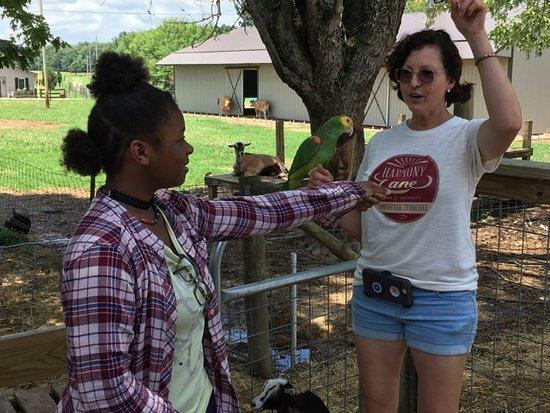 Smithville, TN: Mrs. Julie, Harmony Lane Farm.