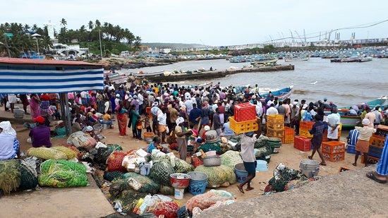 Kovalam Fish Market