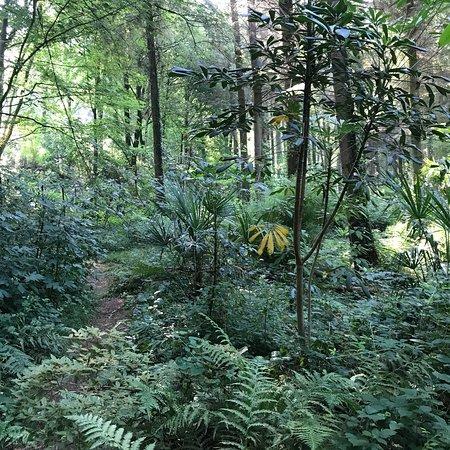 Jungle Garden Karlostachys: photo3.jpg