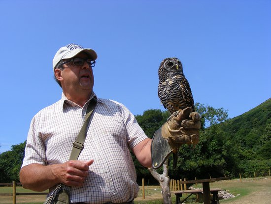 Exmoor Owl & Hawk Centre: Rod