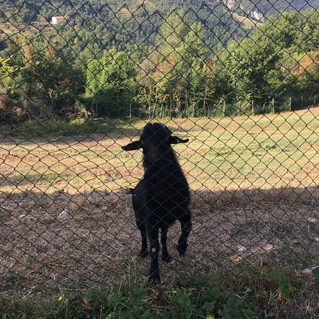 Carbonesca, Italie: photo2.jpg