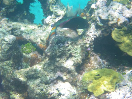 Great Guana Cay: Snorkeling on the reef 1