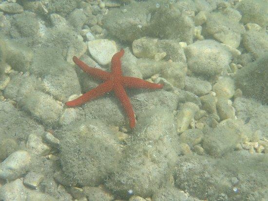 Stavros, Řecko: Starfish off Polis beach