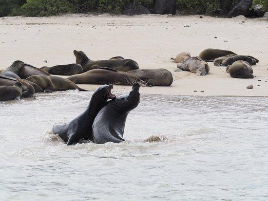 Santa Fe Island, Ecuador: OI000225_large.jpg