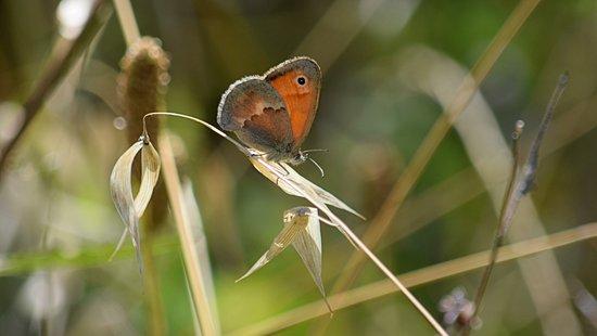 La Valle - Naturalistic Oasis : farfalle da rivedere... solo 2