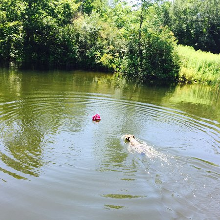 Stephentown, NY: Our dog loving her swim in the pond on the hotel grounds!