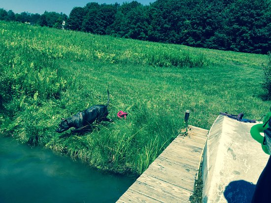 Stephentown, NY: Our dog diving back in for another swim in the pond!