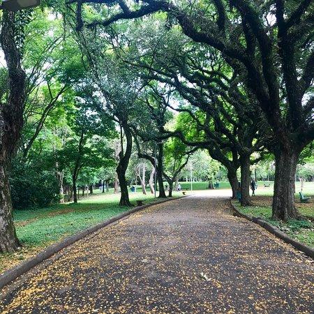 Parque Ibirapuera Foto