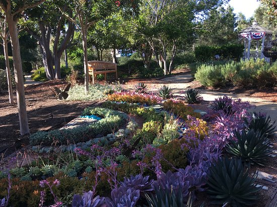 The Water Conservation Garden: drought tolerant landscape & drought tolerant landscape - Picture of The Water Conservation ...