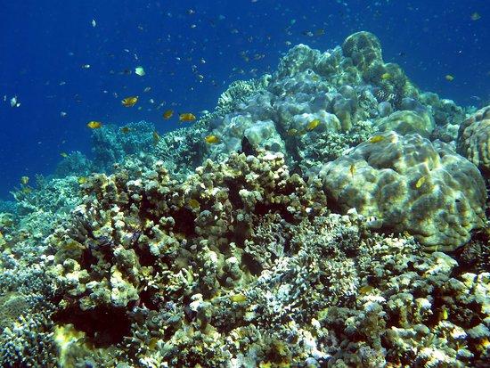 Uepi, Ilhas Salomão: fish confetti