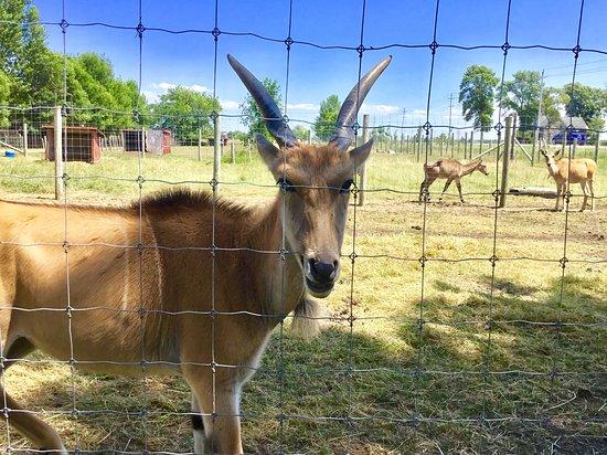 Bervie Zoological Park