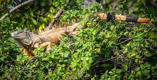 Mangrove Wildlife and Ecology Cruise