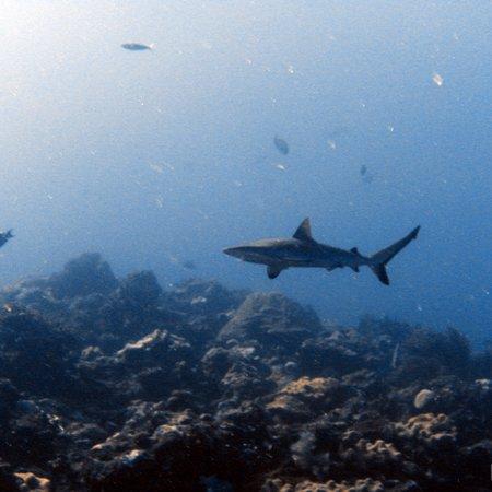 Dive 4 Life: photo3.jpg