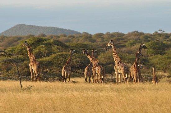 Safari Clássico de 4 dias na Tanzânia...