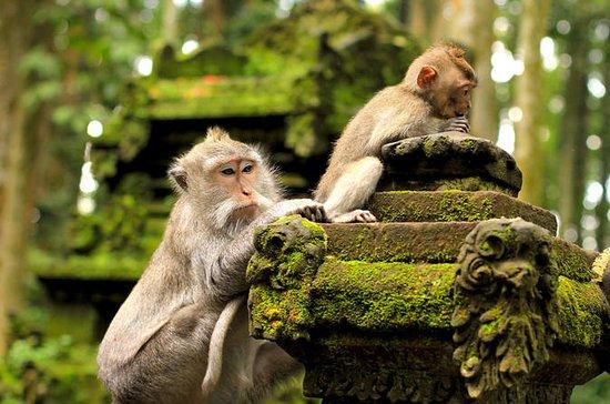 Ubud: Monkey Forest, Rice Terrace...