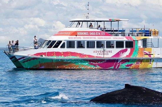 Whale Watch halv dag