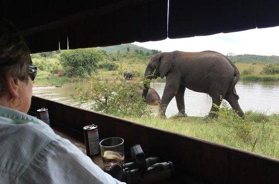 Safari de Dia Inteiro Pilanesberg