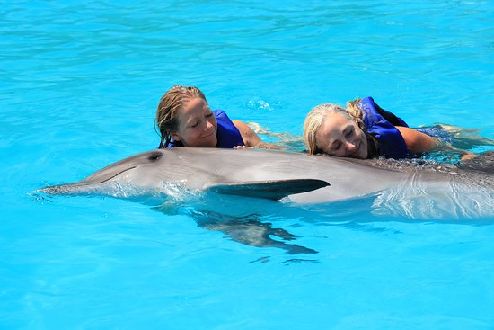 Cabo Dolphins by Cabo Adventures: swimming with dolphins