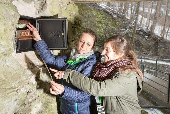 Foxtrail St. Gallen: Posten im Wald