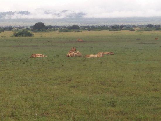 StarMount Safaris