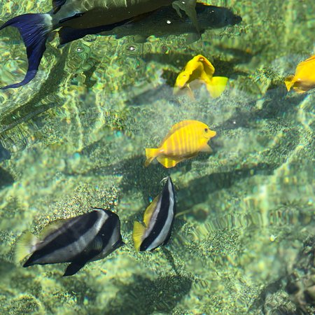 Maui Ocean Center: photo1.jpg