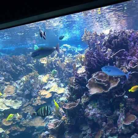 Maui Ocean Center: photo2.jpg