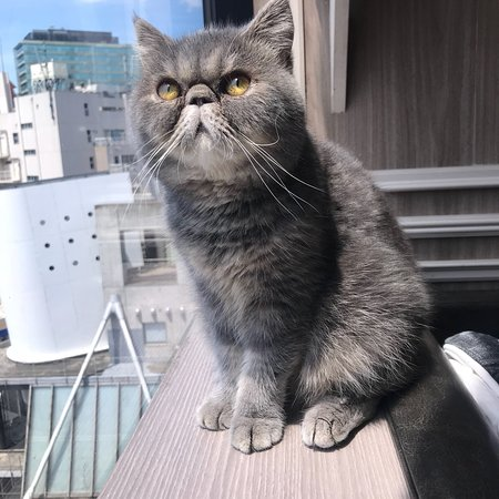 Foto de MOCHA Shibuya Center Street