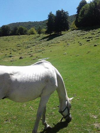 Agriturismo Alpe Di Lemna照片