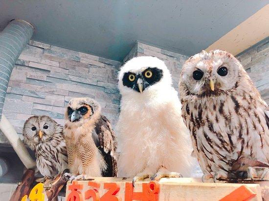 Owlpark Owl Cafe Ikebukuro tokyo: あうるぱーくフクロウカフェ池袋でふくろうと癒し
