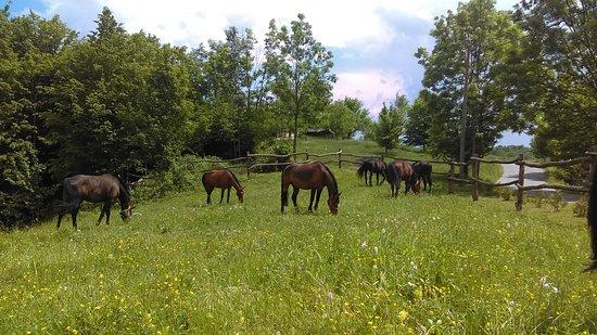 Ranch Equus Igni